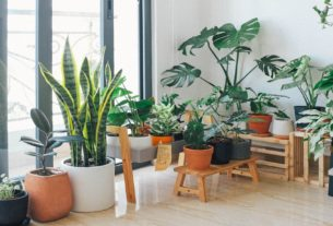 Best Indoor Plant Decor for Home