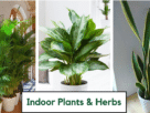 air-purifying-indoor-kitchen-gardening-plants-for-home
