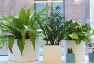 indoor-plants-fertilizer-pesticides-potting-soil