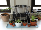 best-self-watering-system-for-house-plants